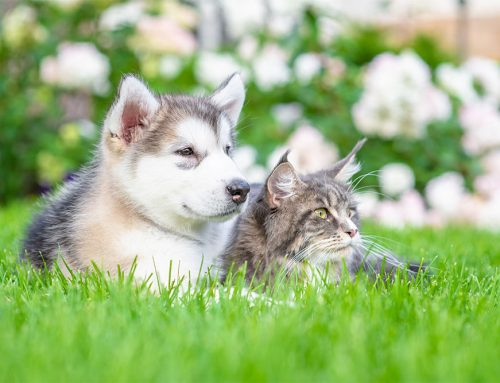 Keep Your Pets Healthy and Happy This Spring!
